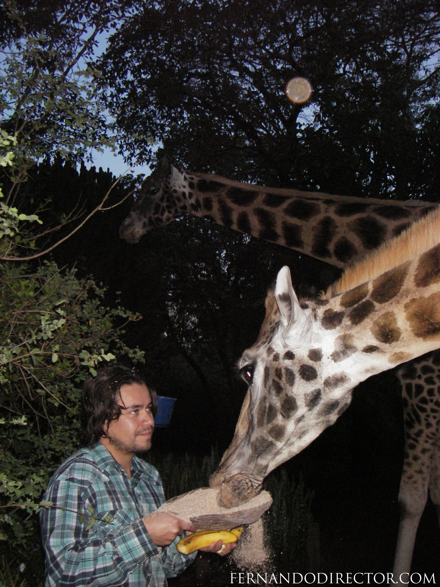 Fernando with Giraffe at Hog Ranch in Kenya